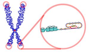 Descubra o que o DNA tem a ver com o estresse e com as rugas 9